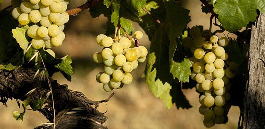 Sicilian Food and Wine