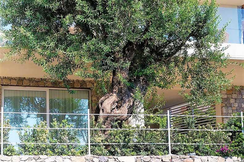 mazzaro-terrace-olive